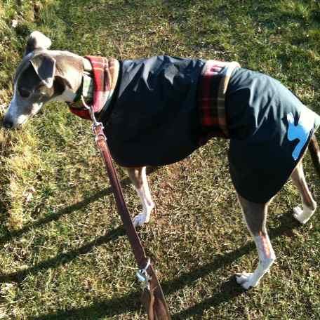 greyhound-raincoat-red-plaid
