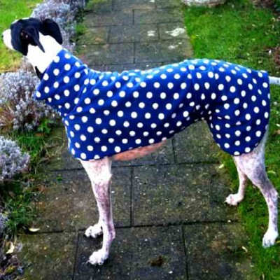 Greyhound Coat Blue with White Spots