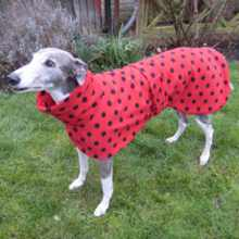 Greyhound Coat Red with Black Spots