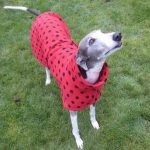 Red Greyhound Coat Ladybug