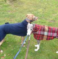 Greyhound Coats Red and Blue