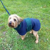 Terrier Coat Blue