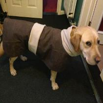 Waterproof dog coat brown