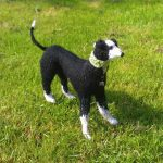 Knitted Greyhound Black and White