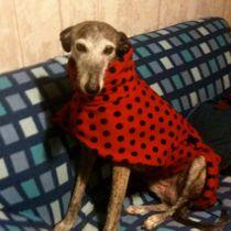 Echo in Ladybug coat