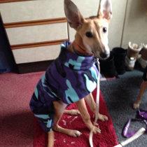 Freddie in camouflage coat