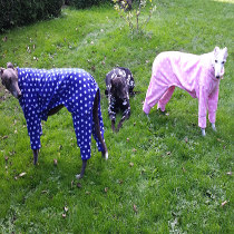 Dogs in pyjamas