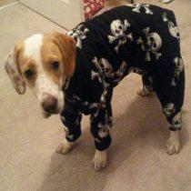 Ellie in pyjamas
