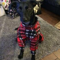 Lexie in pyjamas