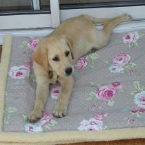 Leah on Greyhound Monkey blanket
