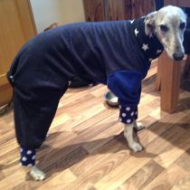 Pablo in Pyjamas