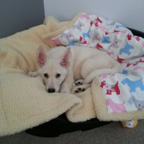 Puppy on Blanket