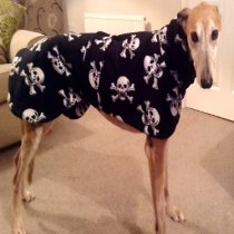 Romeo in skulls and crossbones coat