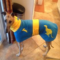UCLA Hare and Hound coat