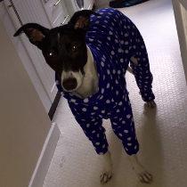 Blue spotted pyjamas