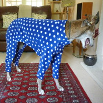 Blue spotted pyjamas