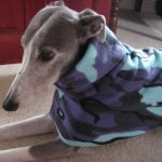 greyhound coat camouflage purple