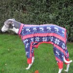 Greyhound Pyjamas