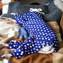 Patch in pyjamas